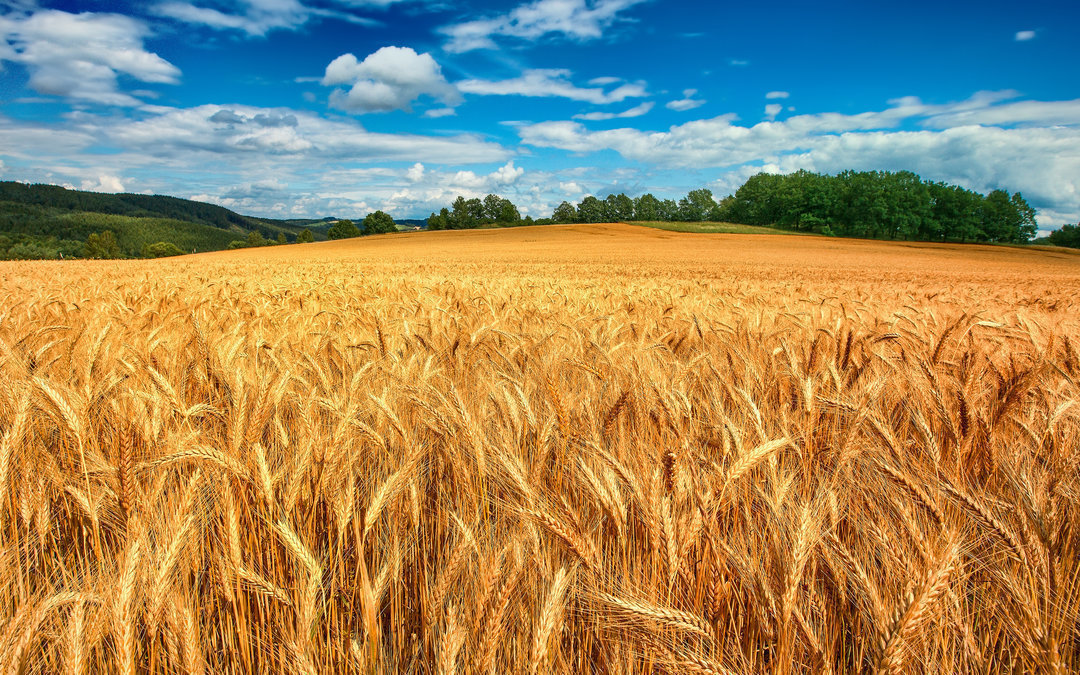 Саудовская Аравия купила крупный украинский агрохолдинг